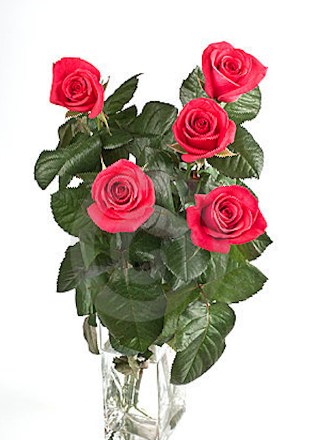 5 years 5 roses
